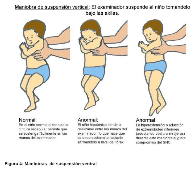 Trofismo Muscular Pdf